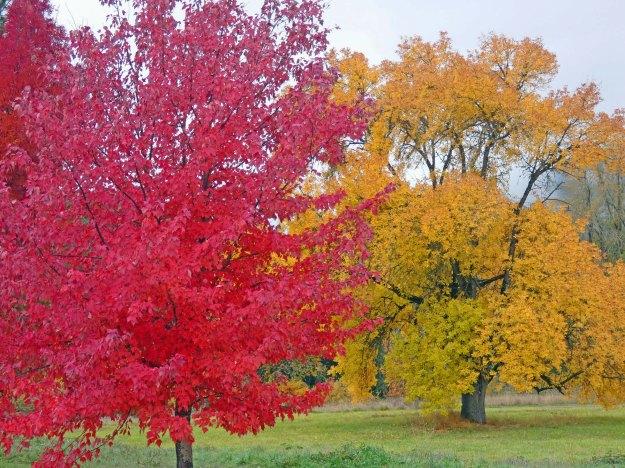Rogue River Trees