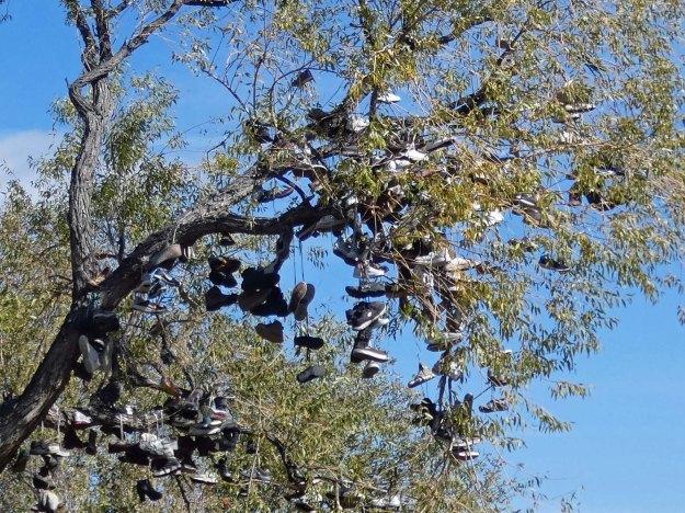 Shoe tree2.jpg
